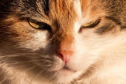 cat-667909_960_720