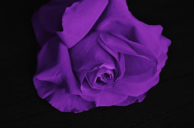 roses-292595_960_720