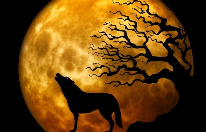 wolf-963081_960_720